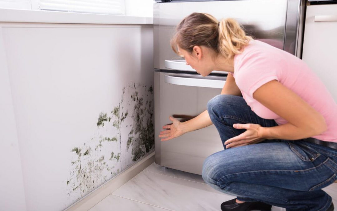 SAFEGUARDING YOUR HOUSE AGAINST MOULD