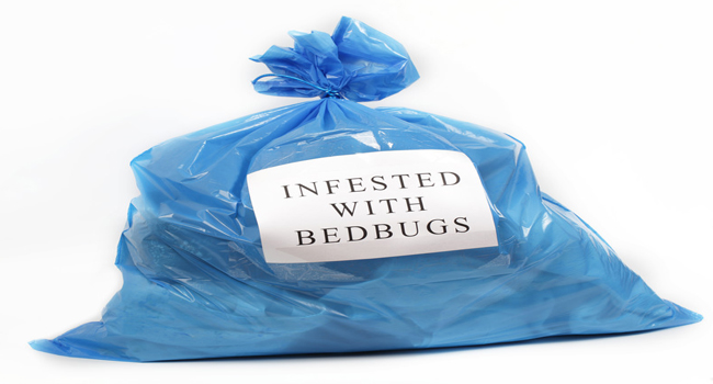 HOTEL BED BUGS – THE WORLD'S MOST UNFUSSY GUESTS