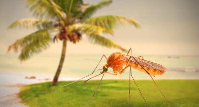 MOSQUITO PROTECTION FOR TRAVELLERS