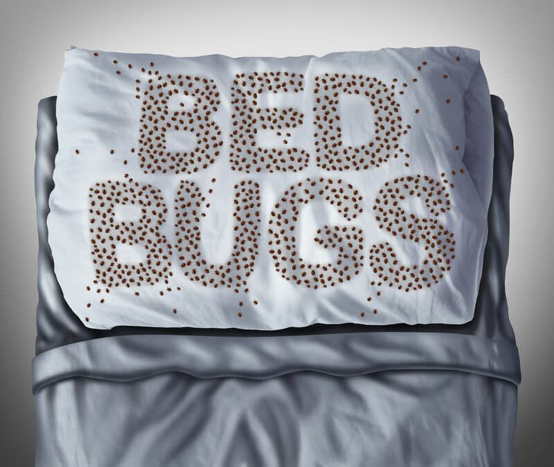 BED BUGS, GETTING DOWN AND DIRTY